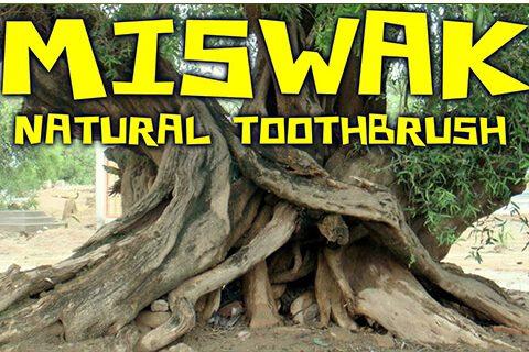 miswak-blog